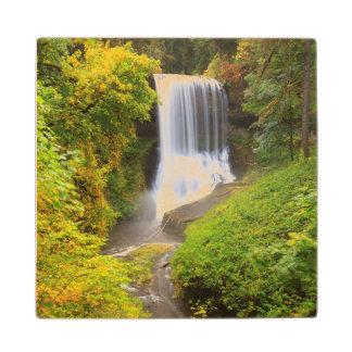 USA, Oregon, Silver Falls State Park 3 Wooden Coaster
