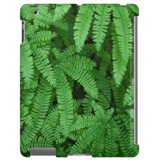 USA, Oregon, Silverton. Maidenhair Ferns