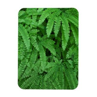 USA, Oregon, Silverton. Maidenhair Ferns Magnet