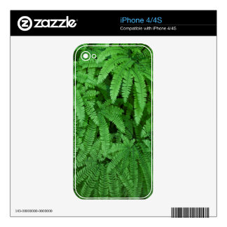 USA, Oregon, Silverton. Maidenhair Ferns Skins For The iPhone 4