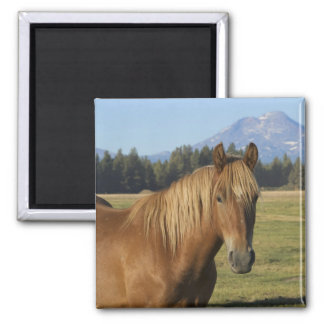 USA, Oregon, Sisters, view of Three Sisters, 2 2 Inch Square Magnet