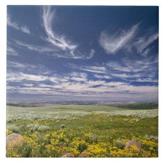 USA, Oregon, Steens Mountain. Spring burgeons Tile