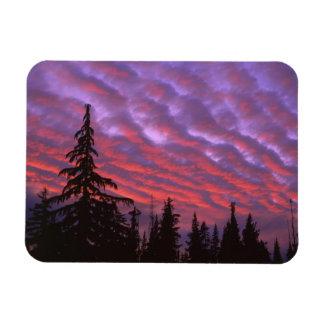 USA, Oregon, Three Sisters Wilderness, Vivid Vinyl Magnets