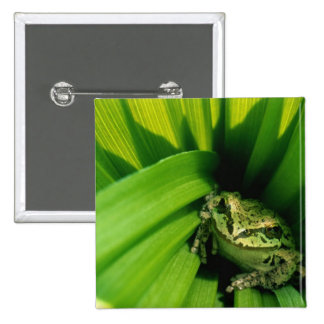 USA, Oregon, Treefrog in False Hellebore 2 Inch Square Button