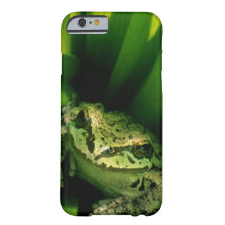USA, Oregon, Treefrog in False Hellebore Barely There iPhone 6 Case