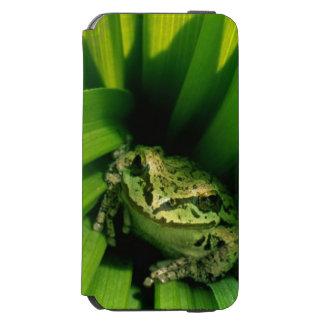 USA, Oregon, Treefrog in False Hellebore iPhone 6/6s Wallet Case