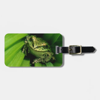 USA, Oregon, Treefrog in False Hellebore Tag For Bags