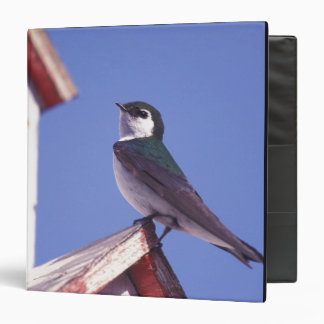 USA, Oregon. Violet-Green Swallow Tachycineta Vinyl Binders