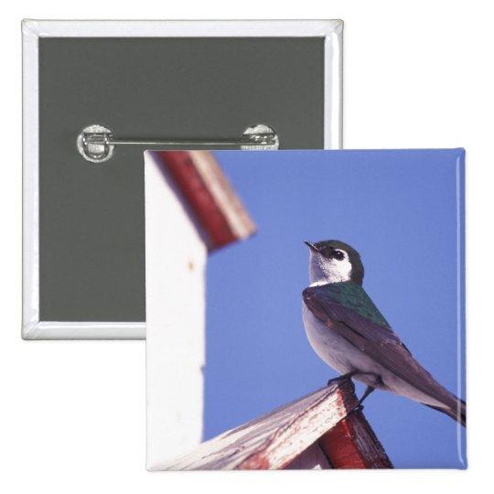 USA, Oregon. Violet-Green Swallow Tachycineta Pinback Button