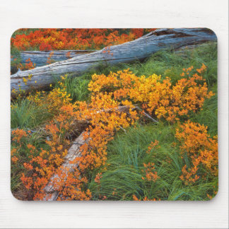 USA, Oregon, Willamette National Forest Mouse Pad