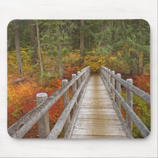 USA, Oregon, Willamette National Forest. Mouse Pad