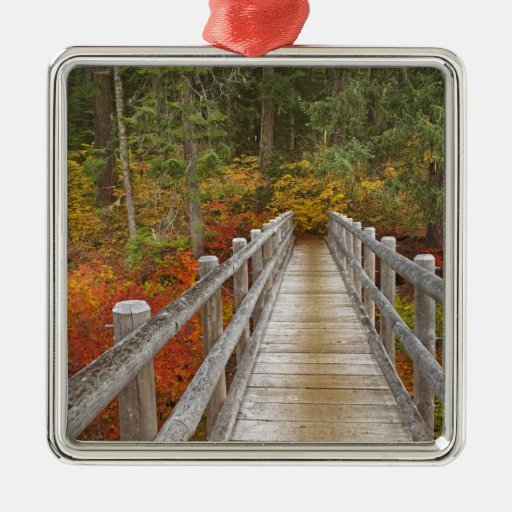 USA, Oregon, Willamette National Forest. Christmas Ornaments