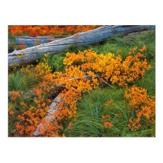 USA, Oregon, Willamette National Forest Postcard