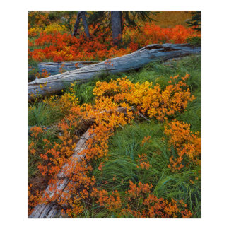 USA, Oregon, Willamette National Forest Poster