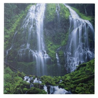 USA, Oregon, Willamette National Forest. View of Ceramic Tile