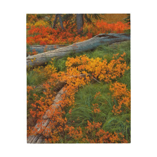 USA, Oregon, Willamette National Forest Wood Wall Art