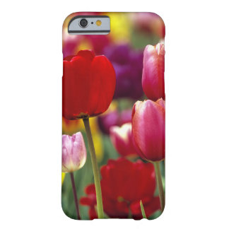 USA, Oregon, Willamette Valley. Beautiful Barely There iPhone 6 Case