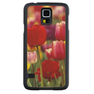 USA, Oregon, Willamette Valley. Beautiful Carved Maple Galaxy S5 Slim Case