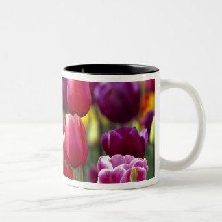 USA, Oregon, Willamette Valley. Beautiful Two-Tone Coffee Mug