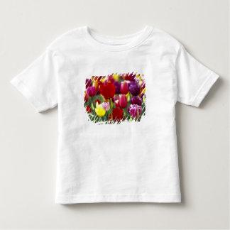 USA, Oregon, Willamette Valley. Beautiful Toddler T-shirt