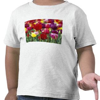 USA Oregon Willamette Valley Beautiful Tee Shirts