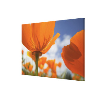 USA, Oregon, Willamette Valley, Close UP of Canvas Print