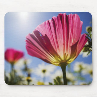 USA, Oregon, Willamette Valley, Close UP of Mouse Pad