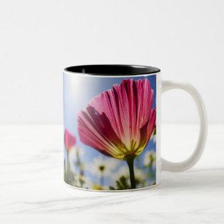 USA, Oregon, Willamette Valley, Close UP of Two-Tone Coffee Mug