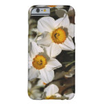 USA, Oregon, Willamette Valley. Daffodils Barely There iPhone 6 Case