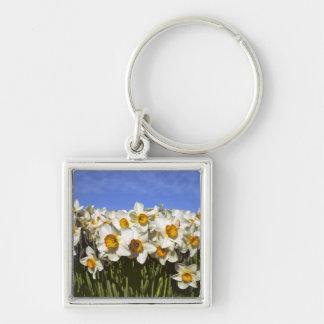 USA, Oregon, Willamette Valley. Daffodils grow Keychain