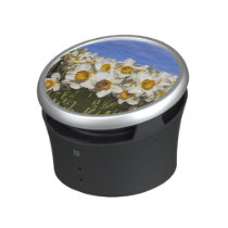 USA, Oregon, Willamette Valley. Daffodils grow Speaker