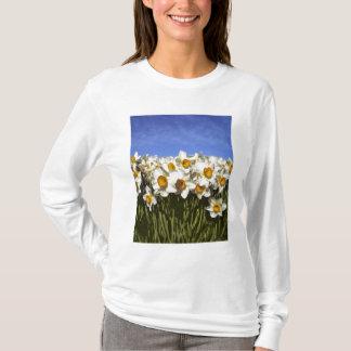 USA, Oregon, Willamette Valley. Daffodils grow T-Shirt