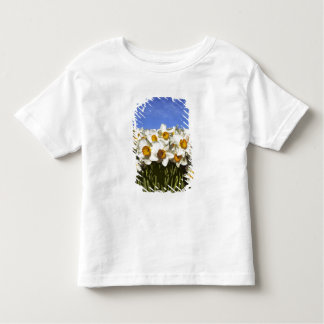 USA, Oregon, Willamette Valley. Daffodils grow Toddler T-shirt