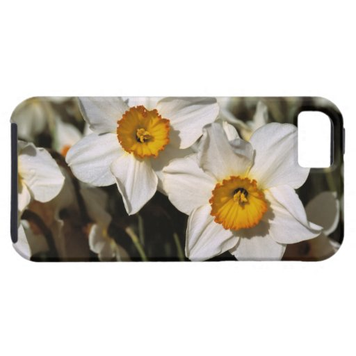 USA, Oregon, Willamette Valley. Daffodils iPhone 5 Cases