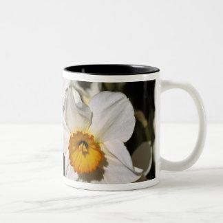 USA, Oregon, Willamette Valley. Daffodils Two-Tone Coffee Mug
