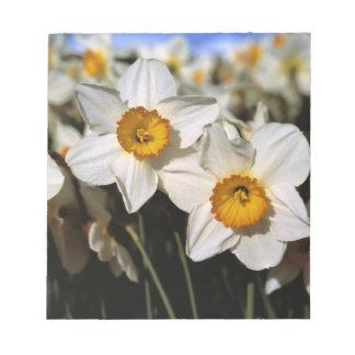 USA, Oregon, Willamette Valley. Daffodils Note Pad