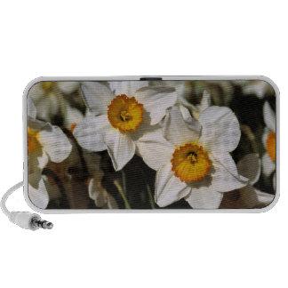 USA, Oregon, Willamette Valley. Daffodils iPod Speaker