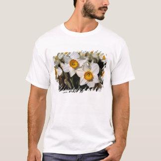 USA, Oregon, Willamette Valley. Daffodils T-Shirt