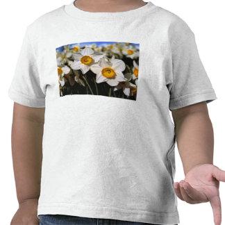 USA Oregon Willamette Valley Daffodils Tshirt