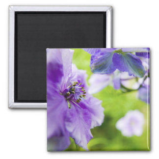 USA, Oregon, Willamette Valley, Larkspur Close 2 2 Inch Square Magnet