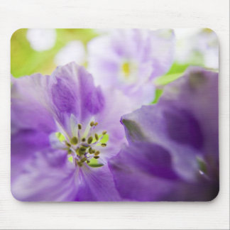 USA, Oregon, Willamette Valley, Larkspur Close Mouse Pad