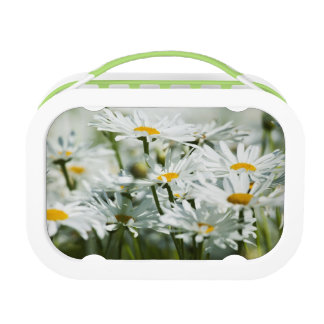 USA, Oregon, Willamette Valley, Selective Lunch Box