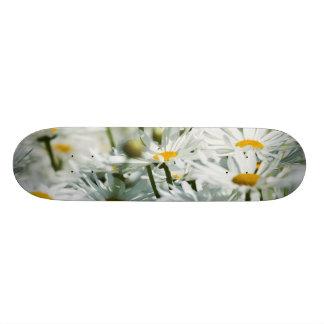 USA, Oregon, Willamette Valley, Selective Skateboard Deck