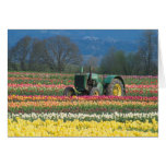 USA, Oregon, Woodburn, Wooden Shoe Tulip 2 Greeting Card