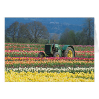 USA, Oregon, Woodburn, Wooden Shoe Tulip 2 Card