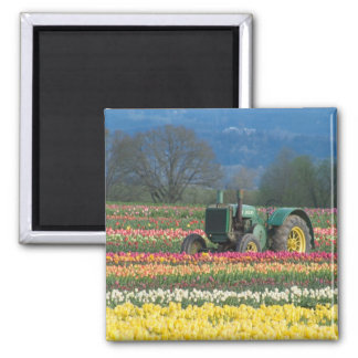 USA, Oregon, Woodburn, Wooden Shoe Tulip 2 Magnet
