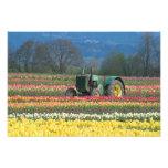 USA, Oregon, Woodburn, Wooden Shoe Tulip 2 Photographic Print