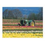 USA, Oregon, Woodburn, Wooden Shoe Tulip 2 Postcards