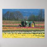 USA, Oregon, Woodburn, Wooden Shoe Tulip 2 Posters