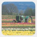 USA, Oregon, Woodburn, Wooden Shoe Tulip 2 Square Sticker